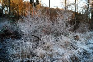 Frost-Impressionen