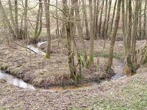Wandern am Bach: Extratour Rotes Wasser
