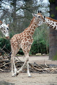 Sommeranfang im Zoo Hannover