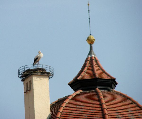 aichach, storch, oberes-tor