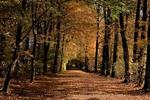 Allee im Annapark (Hannover)