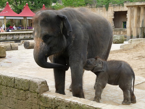 hannover, zoo-hannover