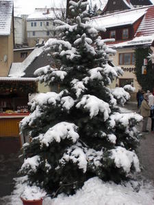Adventsmarkt in Hohnstein