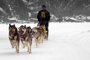 37. Internationales Schlittenhunderennen am 12.02.2011 und 13.02.2011 in Winterberg