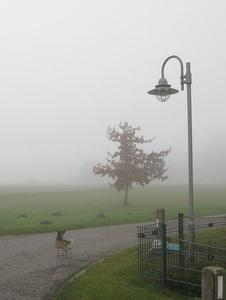 Herbst: Dicke Suppe