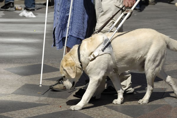 Service Dogs For Non Blind