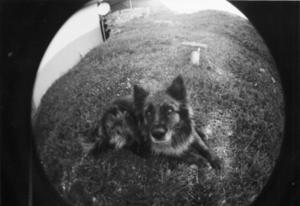 Märchenwolf ( Fisheye Perspektive )
