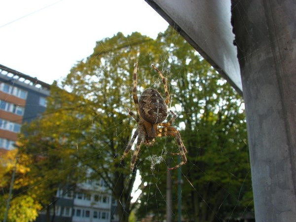 spinne, duisburg, morgenspaziergang