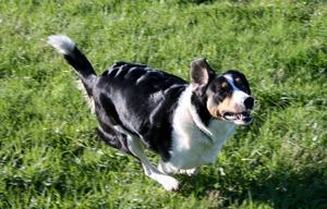 Hunde-Liebling - unsere Leyla voll in Aktion - Roda