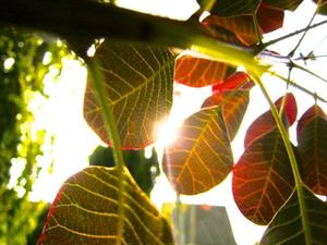 Des Herbstes Rot