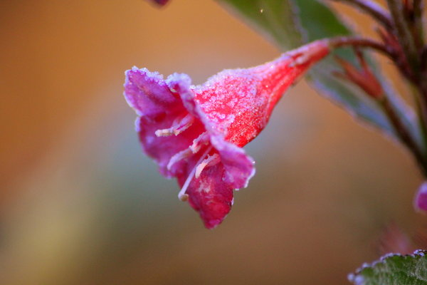 frost, farbe