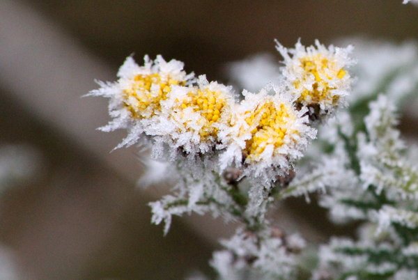 farben, frost