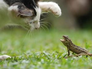 Cat and Lizard