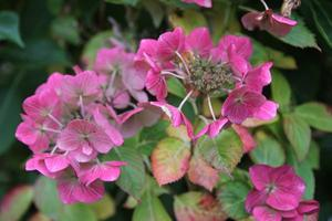 Farbe | Herbst | Farbe