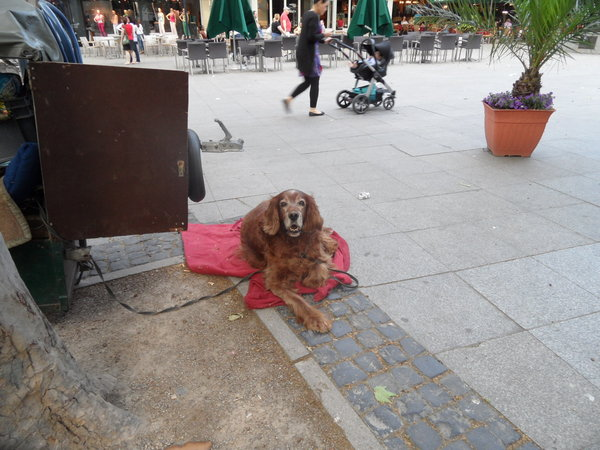 tiere, hunde