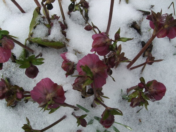 winter, blumen