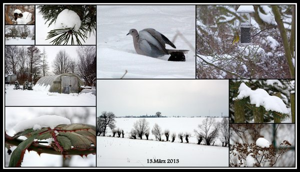 collage, winterbild