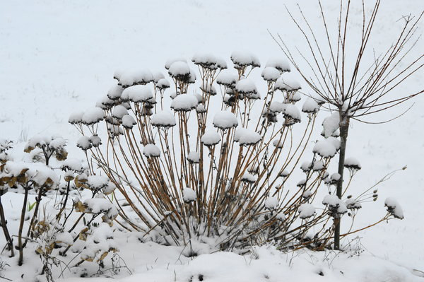 winterimpression, winterblumen