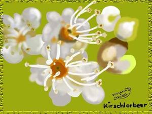 20138012-Kirschlorbeer-Giftpflanze2013-Brushes