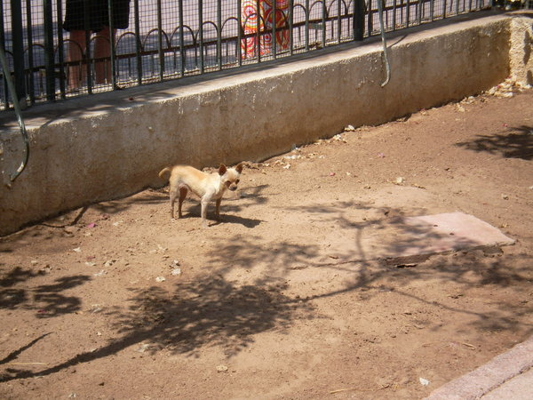 tiere, hunde, zoo, zootiere