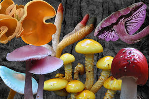 Pilz-Collage