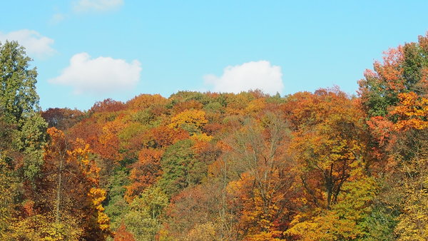 goldener-herbst, indian-summer, grafenberger-wald