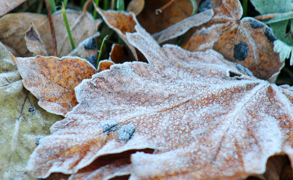 frost, laub, morgenfrost