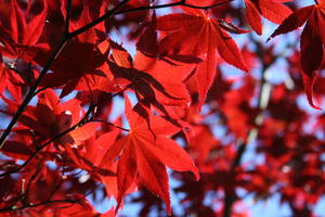 Roter Traum