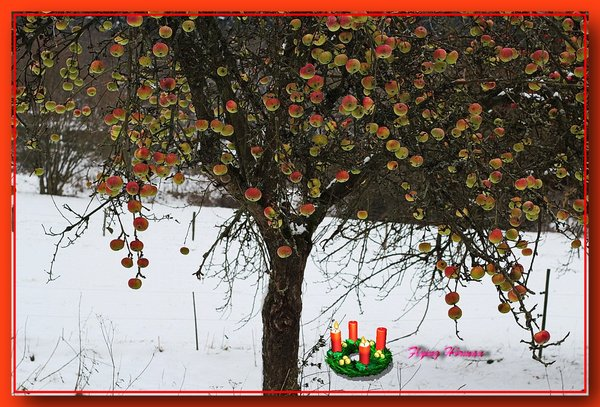 2-advent-2013, winteräpfel