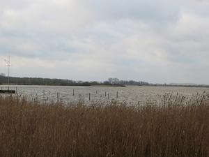 Wintertag am Dümmer See