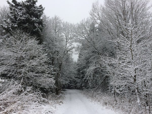 winter, winterlandschaft, frost, winterland