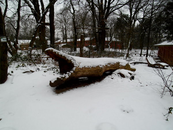 winter, winterlandschaft, winterimpressionen, krokodil