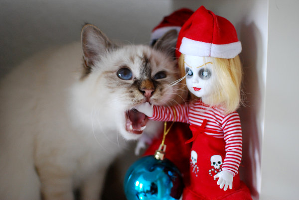 katze, puppe, living-dead-dolls