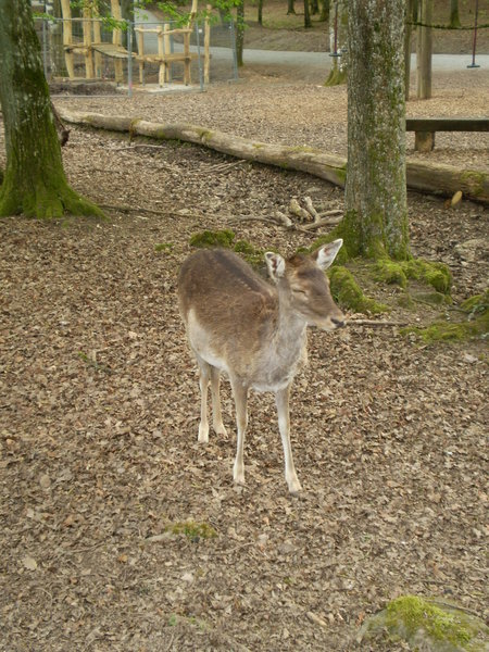 wildpark, bad-kissingen