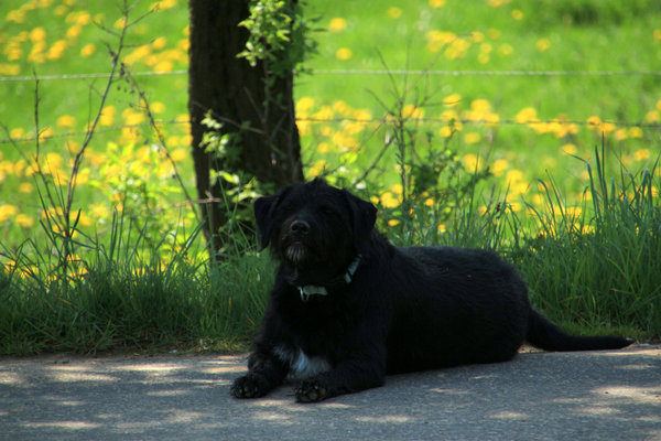 hund, natur-pur, hunde-liebling, spaziergang-durch-die-natur