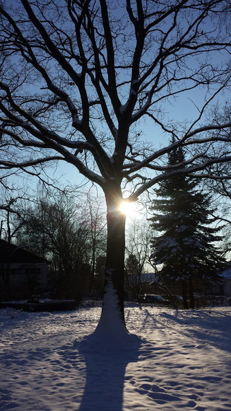 winter, sonne, marburg, baum