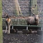 Wildpark Christianental in Wernigerode Teil 2