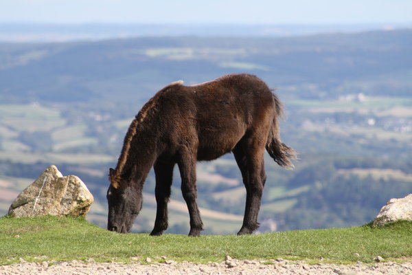 england, pony, nationalpark, dartmoor