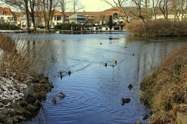 winter, enten