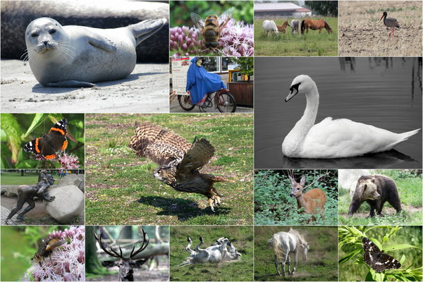 tiere, vögel, tierfotografie, collage, naturfotos, tierfotos, collage-von-tieren, tiercollage
