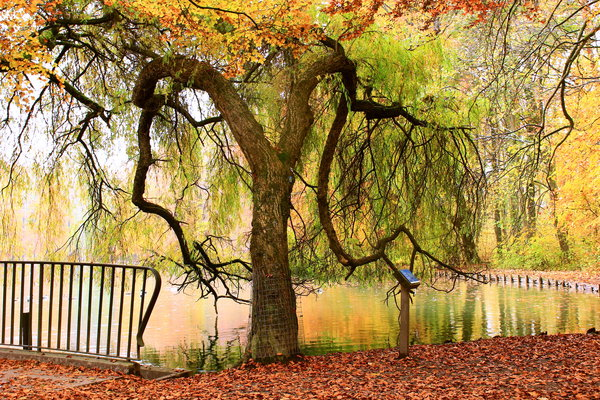 natur, herbst, see, stempflesee