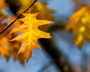 Herbst in Luthe