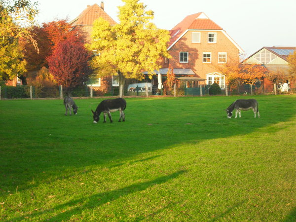 herbstimpressionen, langreder-mark