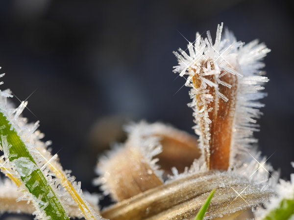 winter, frost, eiskristalle