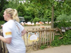 2. Zoo-Run in Hannover