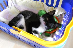Unsere Findel-Katze 'Nelly'