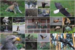 Collage: Ein Tag im Wildpark Lüneburger-Heide.