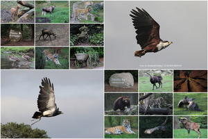 Collage, Wildpark Lüneburger-Heide 2 .