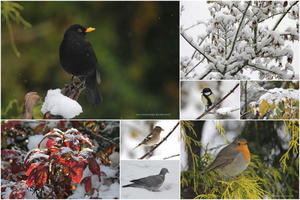 Collage, Wintereinbruch im November .
