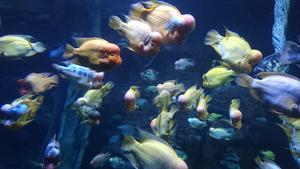 Copyright: Werner Jung, Bad Ems-  Aquarium Mallorca